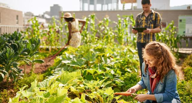 I giovani italiani ritornano ai lavori agricoli...