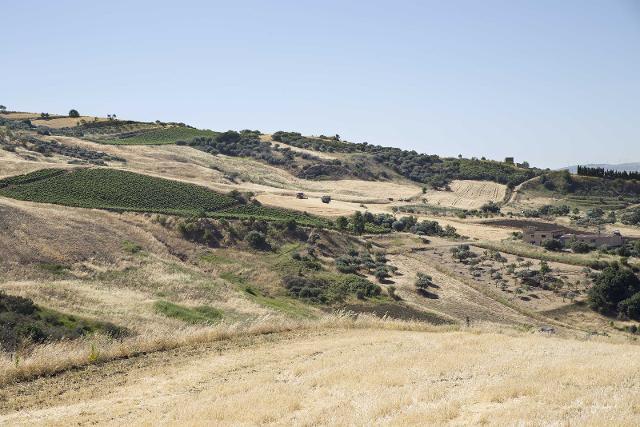 Valledolmo, terreno coltivato a Grano duro
