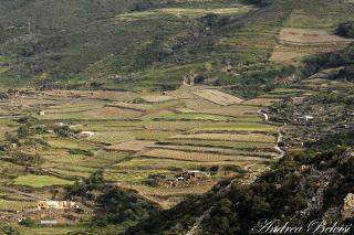 A Pantelleria nascono le ''ZEA''...