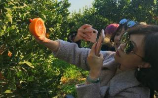 Cresce la curiosità cinese per l'Arancia Rossa di Sicilia