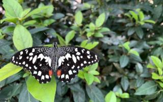 Il tocco magico di centinaia di farfalle arriva a Marsala