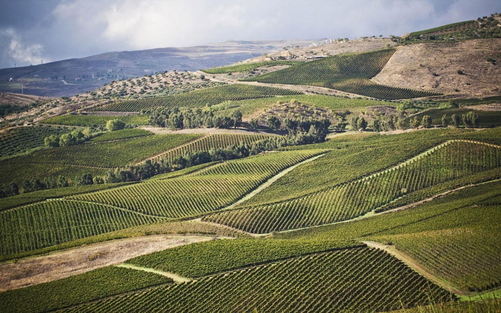 In Sicilia vino fa rima con sostenibilità ambientale...