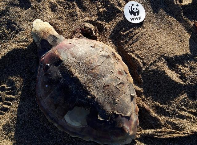 plastic-free-puliamo-la-spiaggia-della-crocicchia-per-salvare-le-tartarughe