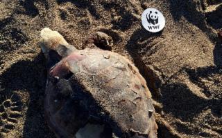 Plastic Free - Puliamo la spiaggia della Crocicchia per salvare le tartarughe
