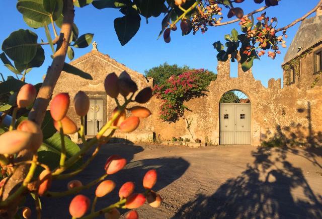 Scorcio della Bronte storico-rurale con in primo piano un ramo di un pistacchio
