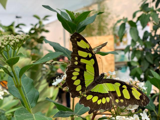 la-magia-spicca-il-volo-alla-casa-delle-farfalle-attivita-sospesa