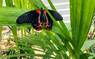 La magia spicca il volo alla Casa delle Farfalle ATTIVITÀ SOSPESA