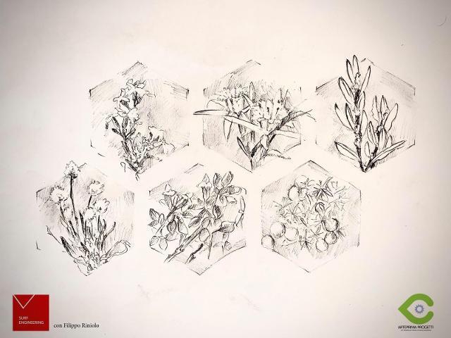 Piante ed esagoni in uno schizzo di Filippo Riniolo