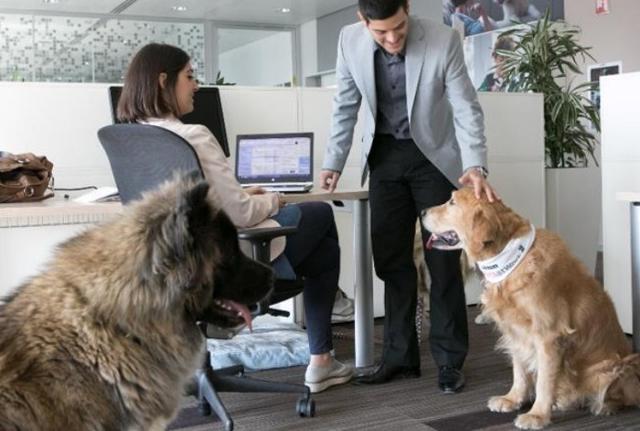 Secondo una ricerca condotta dall'University of Lincoln (UK) la presenza in ufficio di un cane amichevole aumenta la soddisfazione, la motivazione e l'attenzione dei dipendenti...