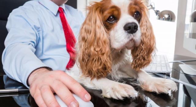 Un ufficio pet-friendly ha un impatto positivo anche sui cani...