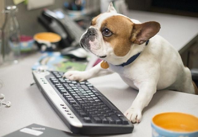 Con il cane in ufficio si sta meglio…