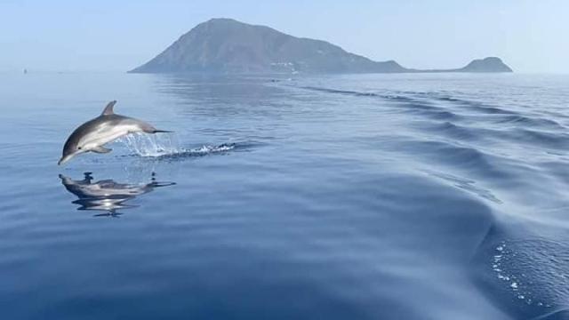 Alle Isole Eolie tornano turisti, delfini e capodogli