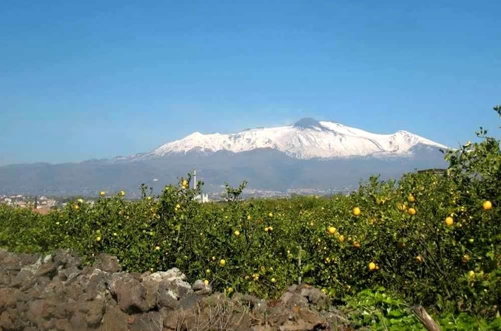 """Il """"Limone dell'Etna"""" verso l'Igp riconosciuta dall'Unione europea"""