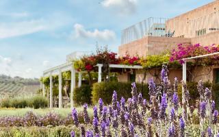 Il mondo Planeta si rimette in moto: riaprono la Foresteria a Menfi e Palazzo Planeta a Palermo