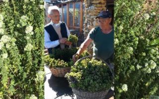 L'Origano Siciliano di Mastro Saro e Mastro Pino…