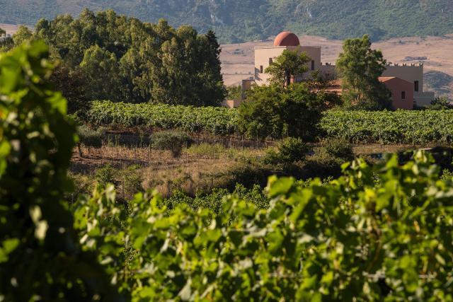 Biologico ed ecosostenibile, è il vino Baglio di Pianetto