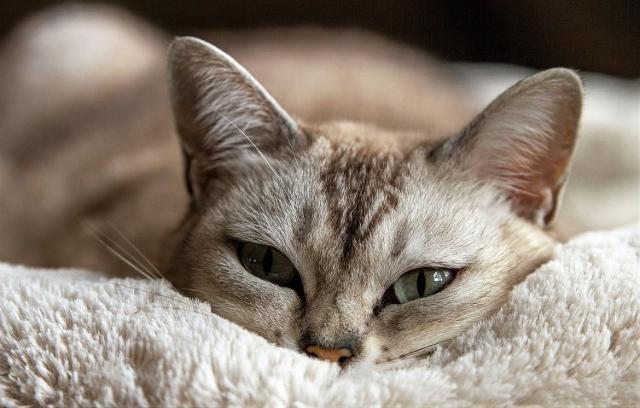 Avete intenzione di prendere un gatto?