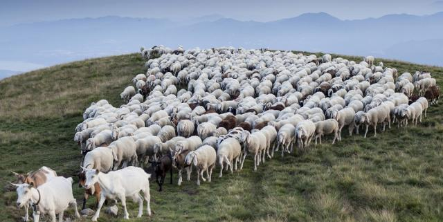 Il latte crudo ovino e caprino siciliano e i suoi derivati diventano di Qualità Sicura