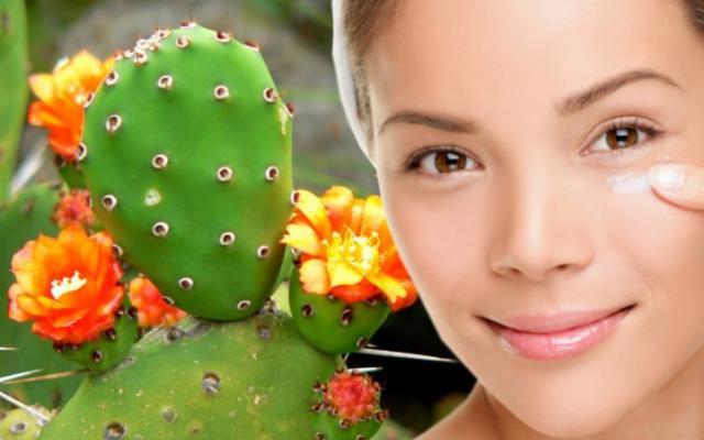 Ode all'Opuntia ficus-indica, uno dei migliori cosmetici naturali