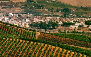 Si inaugura a Gibellina il Vigneto del Mediterraneo