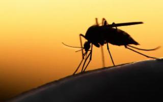 Sei rimedi casalinghi (e naturali) contro le zanzare...