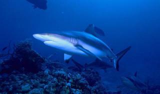 Un progetto di Unipa per salvare gli squali grigi di Lampione