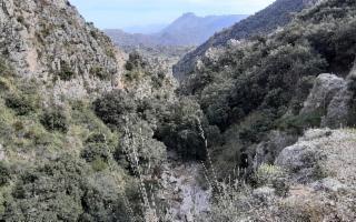 Escursione al Bosco del Marchese Artale a Trabia