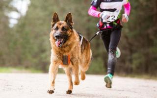 Allenarsi insieme a Fido: il ''Dog Sport'' è di tendenza