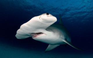 Allarme squali in provincia di Trapani