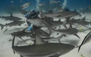 Shark Attack! Sub circondato dagli squali... nel Trapanese!