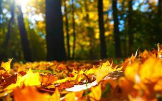 Sui Sicani, tra i colori dell'autunno