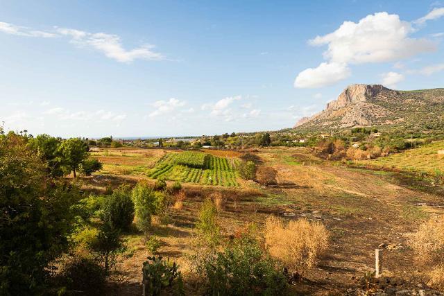 In Sicilia, grazie all'agroecologia, sta crescendo una foresta commestibile