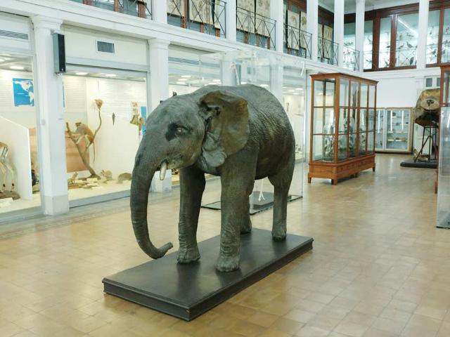 A Catania, per la riapertura dei musei, ci sarà una bella sorpresa!
