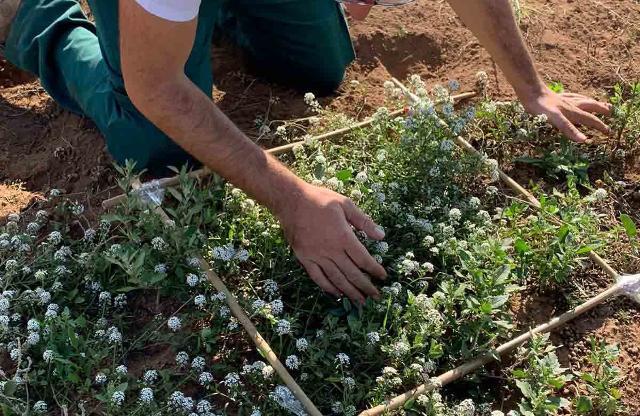 A Pantelleria prove di pratiche agricole ecosostenibili