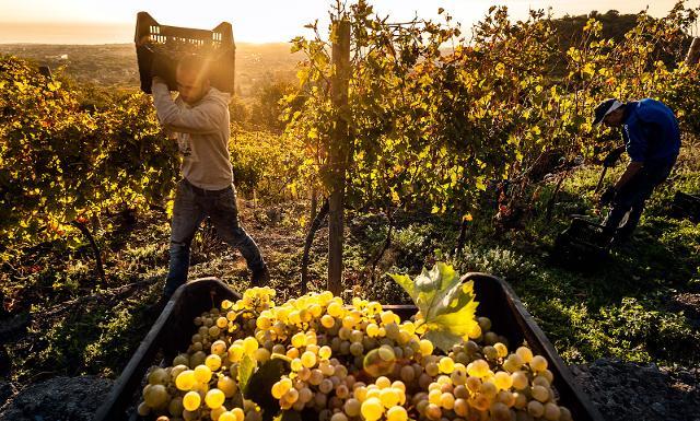 Sembra che l'Etna DOC 2020 sarà un vino eccellente…