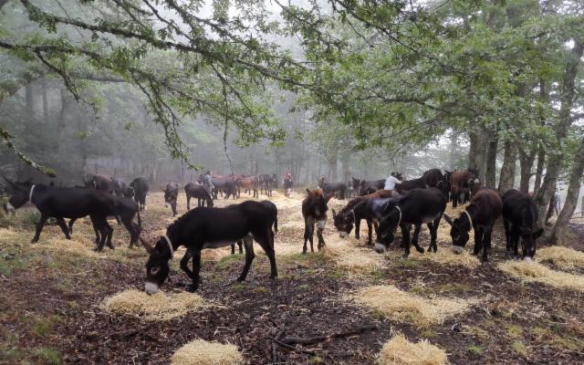 Menzione speciale ''Comunità Forestali Sostenibili 2020'' al Comune di Troina (EN)