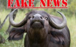 Attenti alle bufale alimentari! (e non intendiamo le mozzarelle)