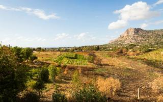 In Sicilia, grazie all'agroecologia sta crescendo una foresta commestibile