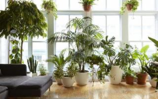 Purificare l'aria di casa con le piante