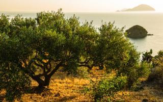 Poche olive ma ottimo olio. Ecco com'è andata la campagna olearia 2020 in Sicilia