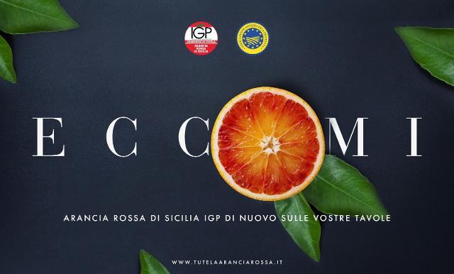 Al via la stagione dell'Arancia Rossa di Sicilia IGP