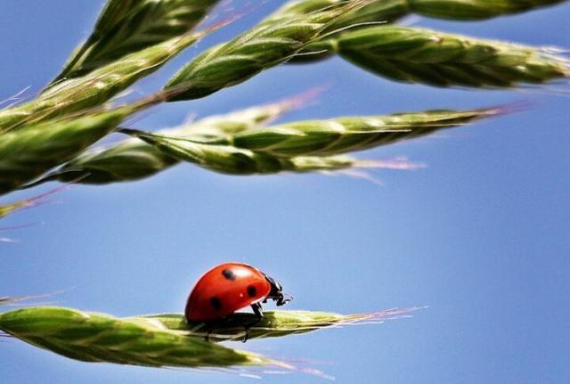 Agroecologia e Agricoltura biologica