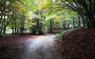Escursione sui Nebrodi d'inverno: i boschi di Capizzi