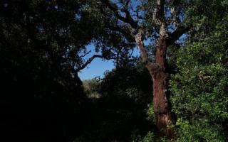 Nella foresta di Birribaida, il bosco dove cacciava Federico II