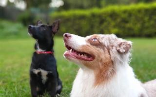 Stage Dog Balance Fit, la prima ginnastica propriocettiva per cani