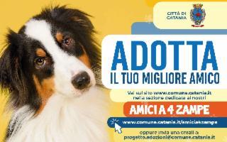 A Catania i cani si possono adottare on line