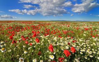 La Sicilia, Terra di piante e fiori