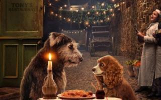 San Valentino è festa anche per i cani (innamorati, ovviamente)