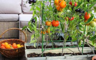 Sostenibilità è (anche) un orto sul terrazzo