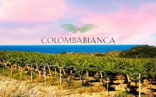 I vini di Colomba Bianca premiati alla ''London Wine Competition 2021''